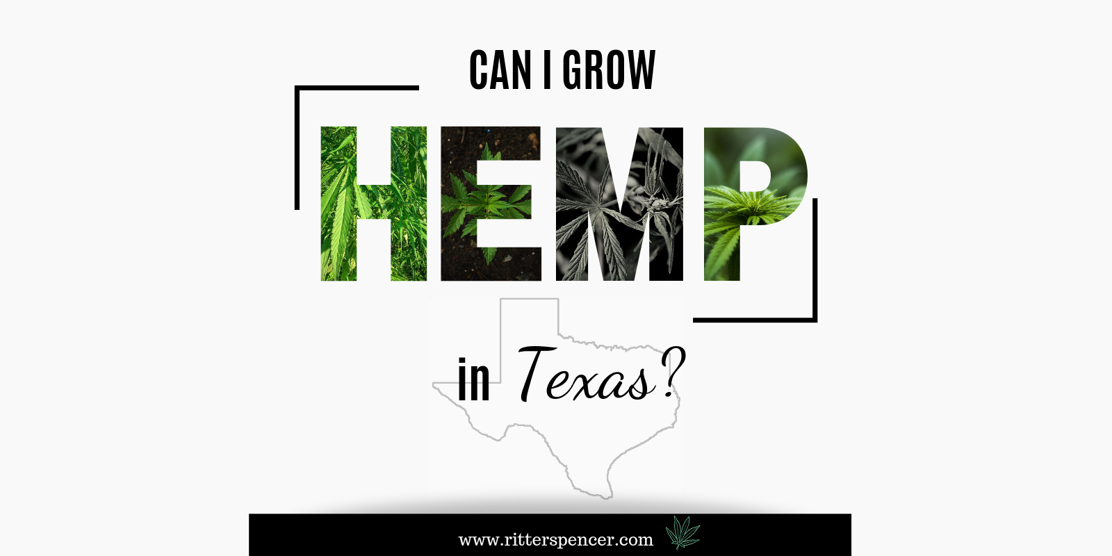 Can I Grow Hemp in Texas?