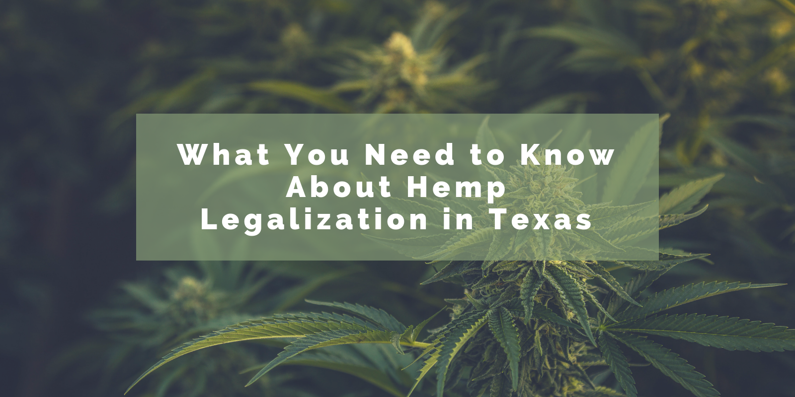 Hemp Lawyer Chelsie Spencer Interviewed by Texas Cannabis Collective