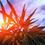 USDA Hemp Production Plan Part III- Compliance, Violations, and Recordkeeping