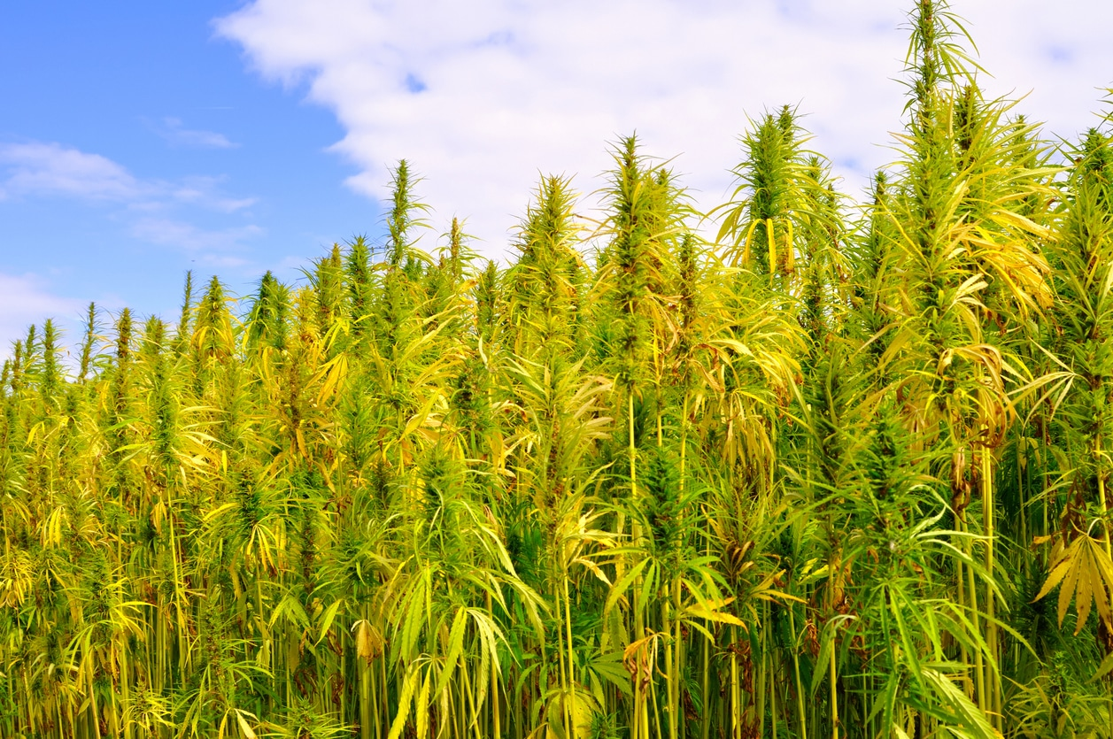 TDA Hemp Production Plan Part I: License Requirements