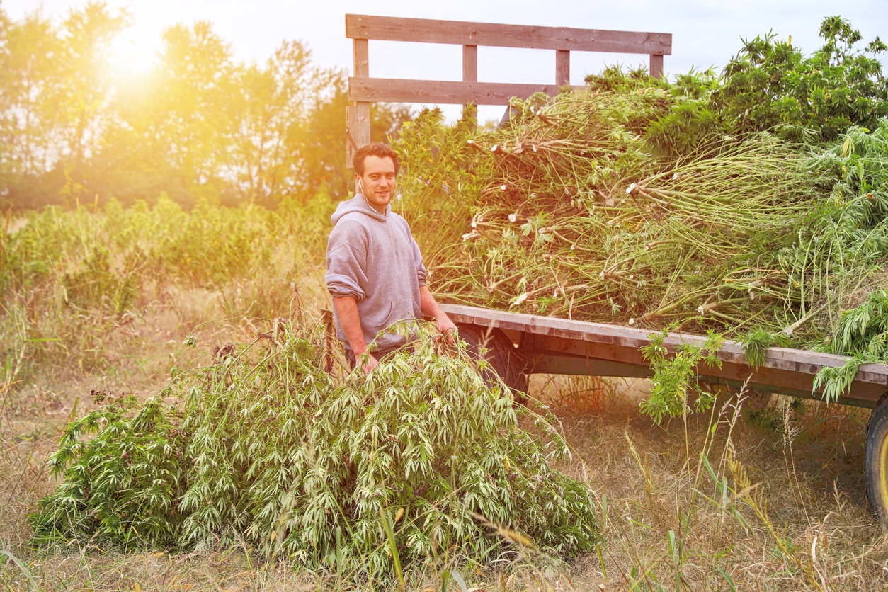 Six Problems With the Revised TDA Hemp Production Plan