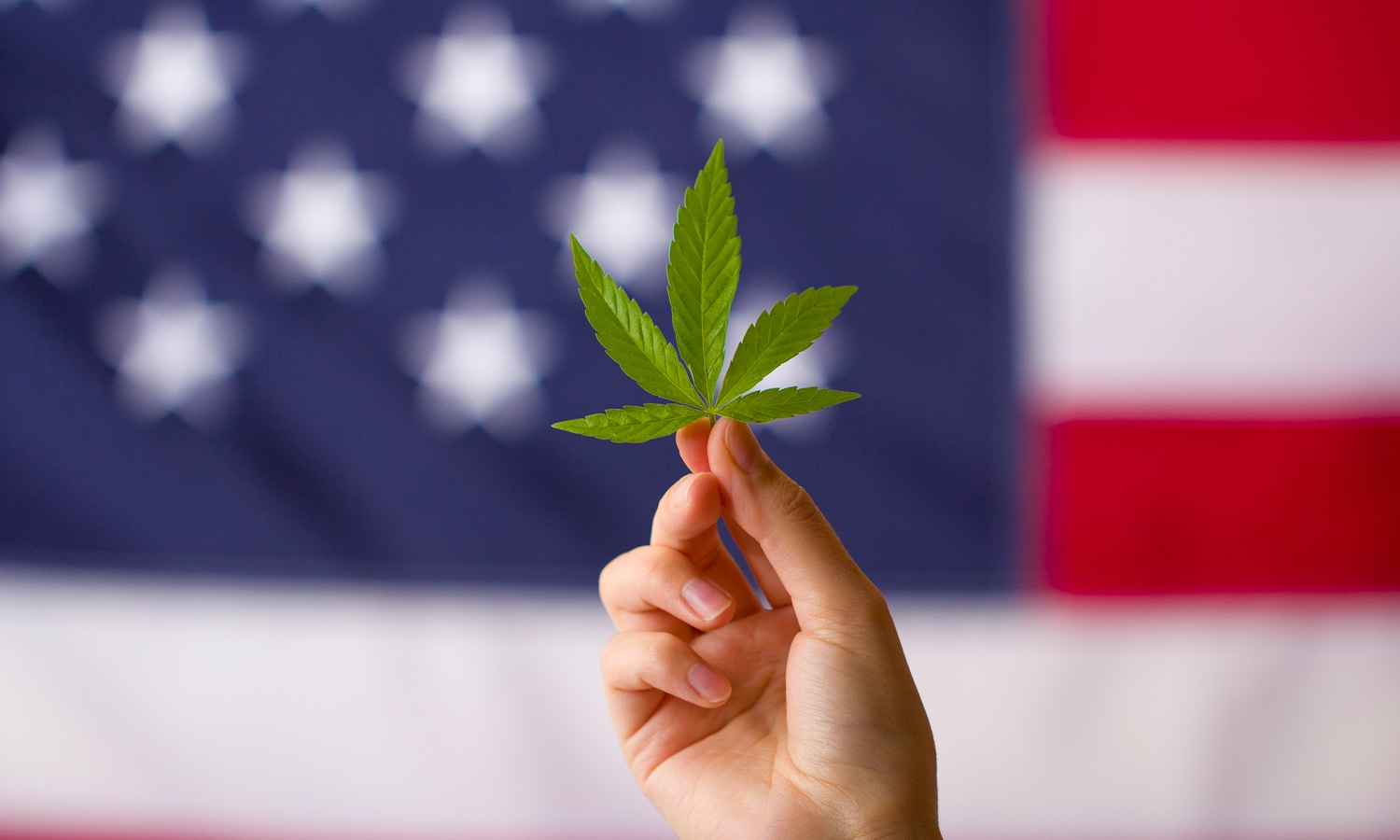What the 2020 Election Results Mean for Marijuana in 2021