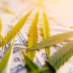 Can Cannabis Businesses File for Bankruptcy?