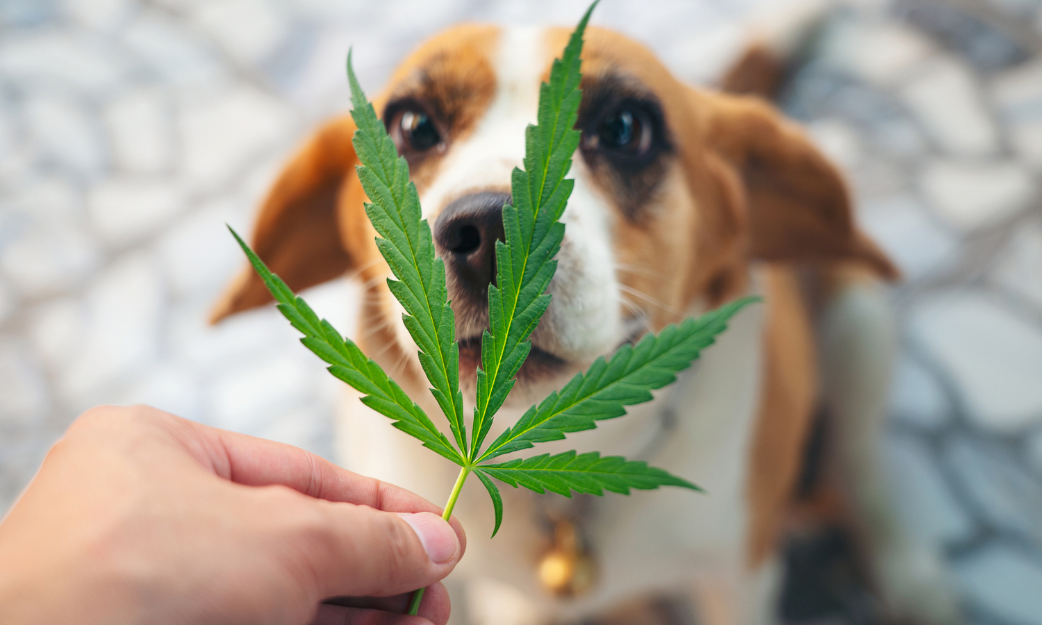 Sit. Shake. Sorry, Pup: CBD-Infused Pet Products