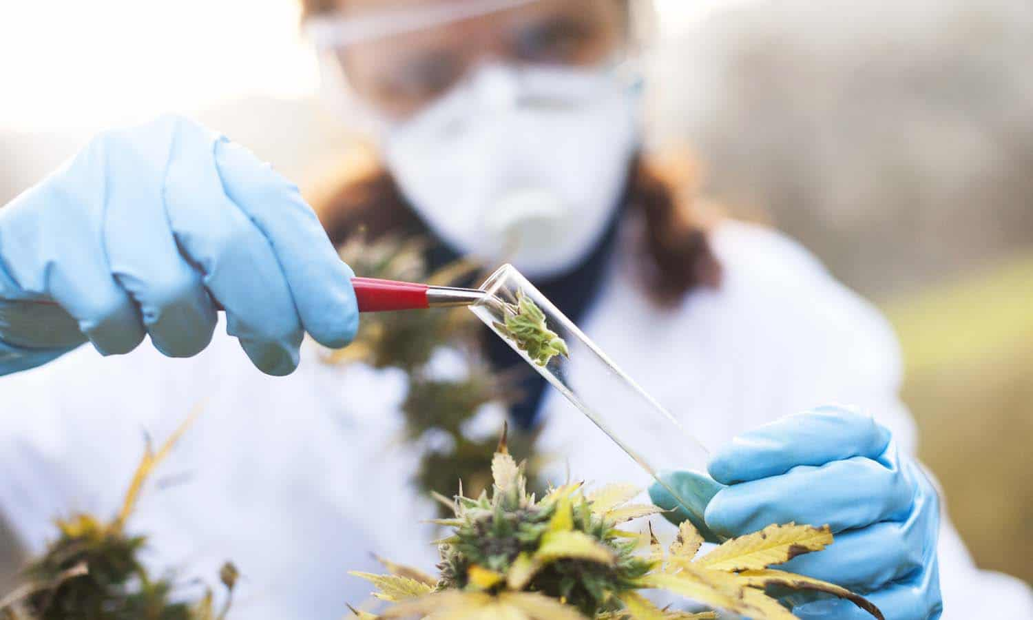 The Next Risk Inherent Cannabinoid: THC-O-acetate